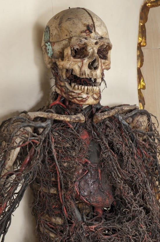 Máquina anatómica