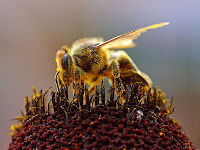 Un arma revolucionaria: las abejas