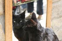 ¿Por qué los madrileños son gatos?