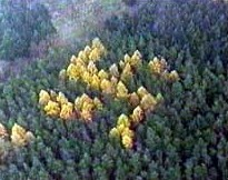 Los árboles que dibujan una esvástica