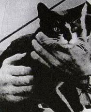Oscar, el gato con más suerte de la Segunda Guerra Mundial