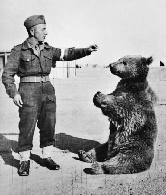 El oso que formó parte del ejército polaco en la Segunda Guerra Mundial